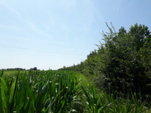 Lecture de paysage à Barry d'Islemade