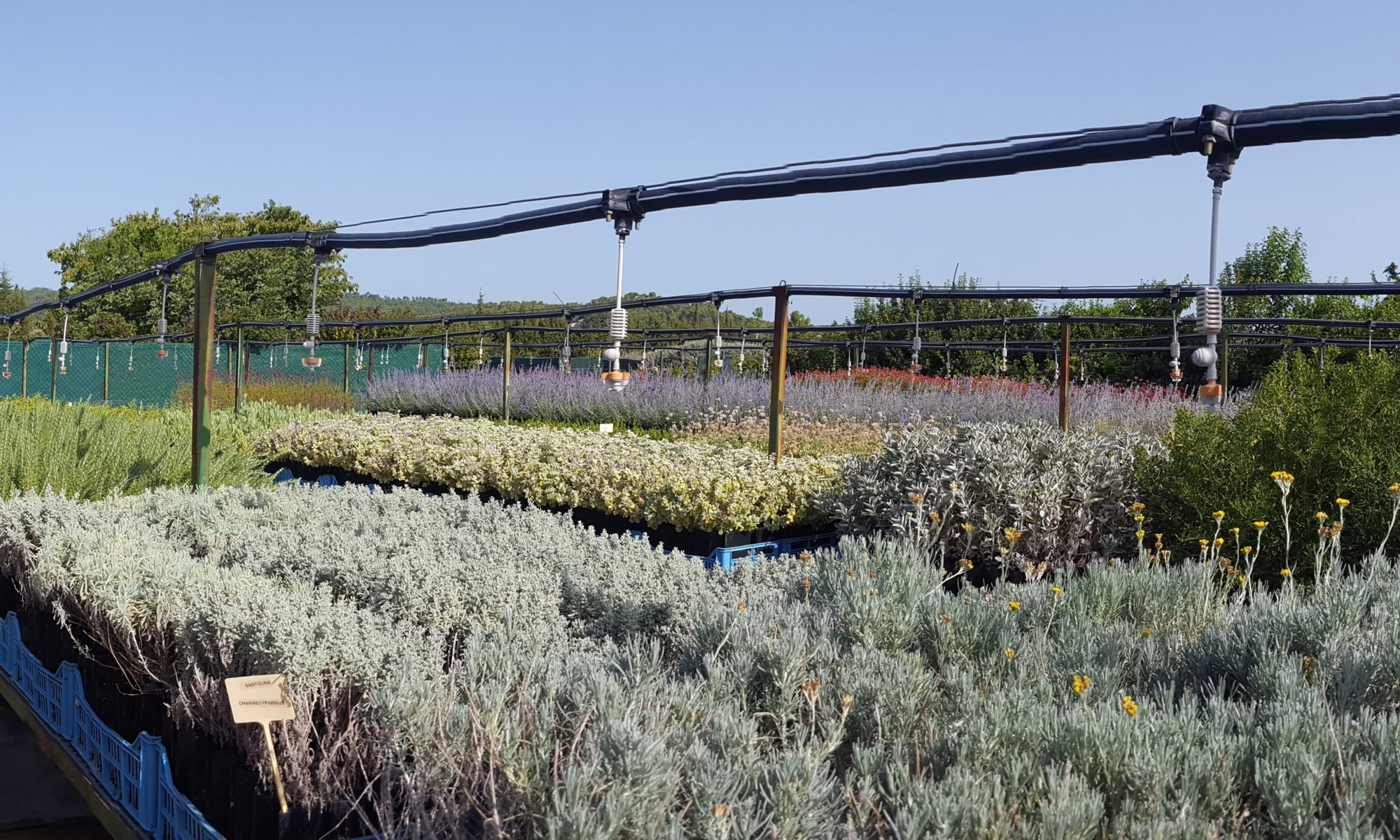 les jeunes plants Végétal Local de la pépinière de l'Aude (Campagnes Vivantes 82)