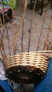 Récolte d'osier en prévision de l'atelier vannerie