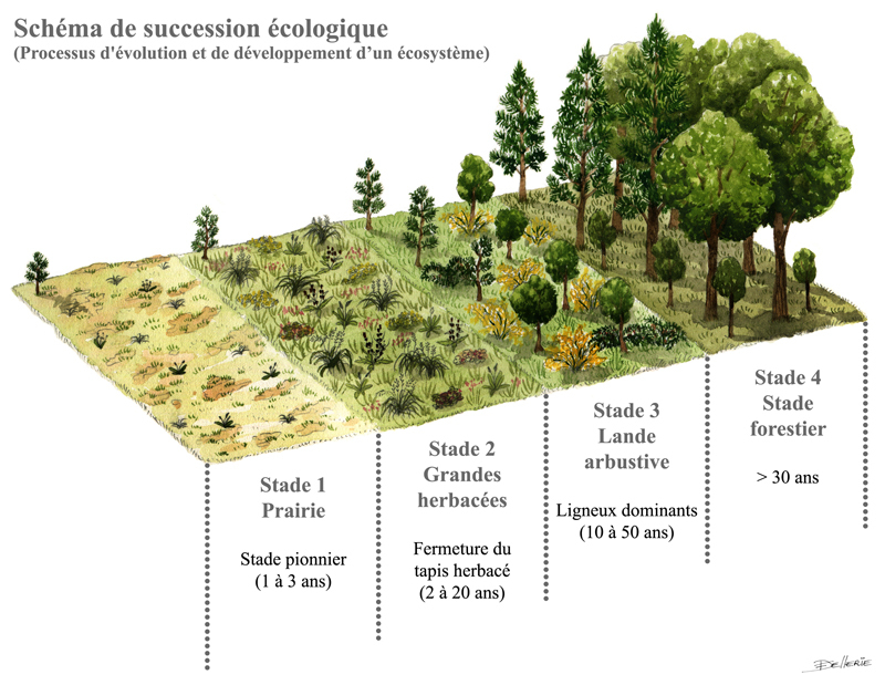 Succession écologique ACV82 (source: thinglink)