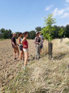 Formation taille des arbres en agroforesterie ACV82