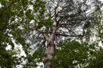 Journée Régionale de l'arbre Afahc Campagnes Vivantes 82